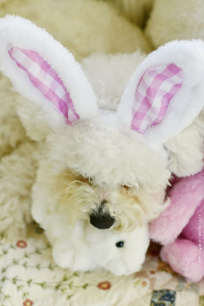 Happy Easter from Sophie | ©homeiswheretheboatis.net #dogs #bichonfrise #easter
