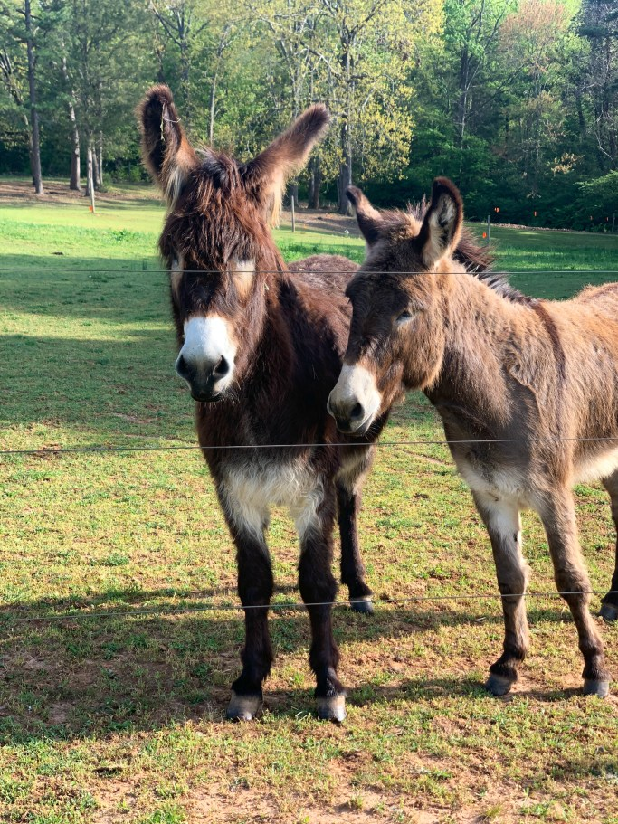 Jimmy and Jack the donkeys | ©homeiswheretheboatis.net