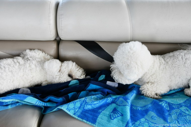 Boating with dogs | ©homeiswheretheboatis.net #bichonfrise