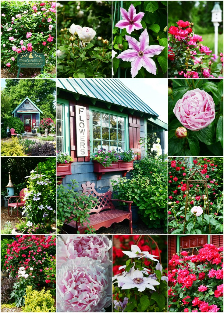 Garden Flowers Around the Potting Shed | ©homeiswheretheboatis.net #garden #flowers #birdhouse