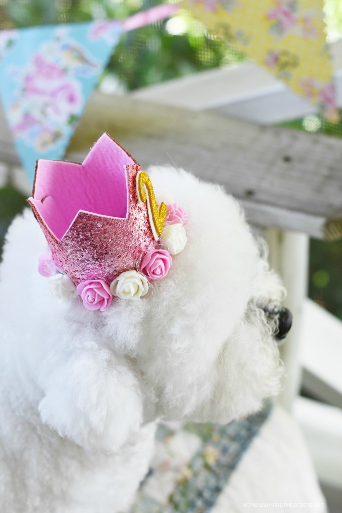 Lola turns 2 | ©homeiswheretheboatis.net #dog #bichonfrise