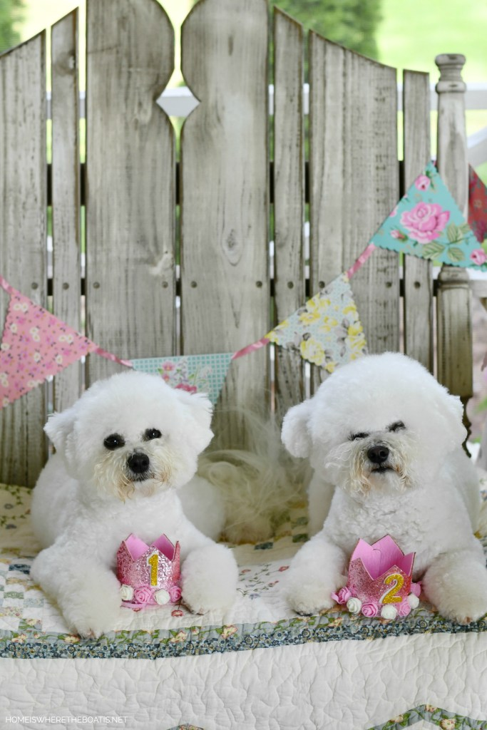 Sophie and Lola celebrate birthdays | ©homeiswheretheboatis.net #dogs #bichonfrise #nationaldogday