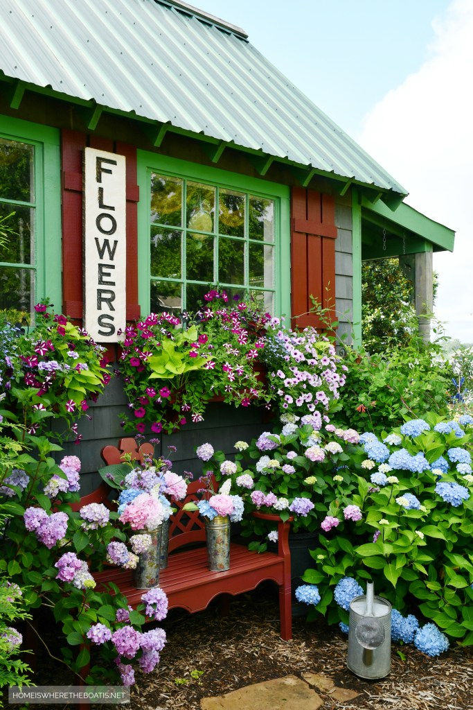 Potting Shed flowers and window boxes | ©homeiswheretheboatis.net #flowers #garden #hydrangeas #windowboxes
