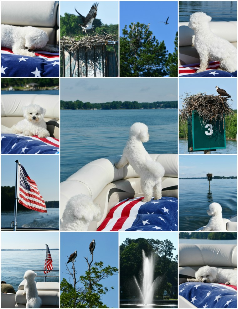 Weekend Waterview Boating with dogs, osprey and herons | ©homeiswheretheboatis.net #flag #lake #bichonfrise #pontoon