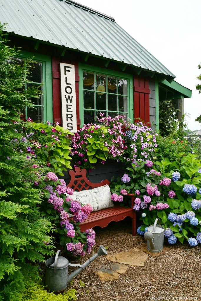 Potting Shed window boxes and hydrangeas | ©homeiswheretheboatis.net #hydrangeas #garden #flowers