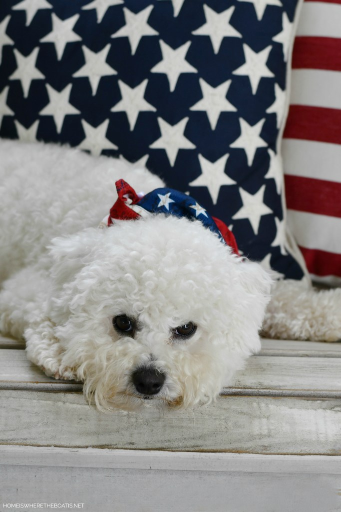 Happy Fourth of July from Lola and Sophie | ©homieswheretheboatis.net #dogs #bichonfrise