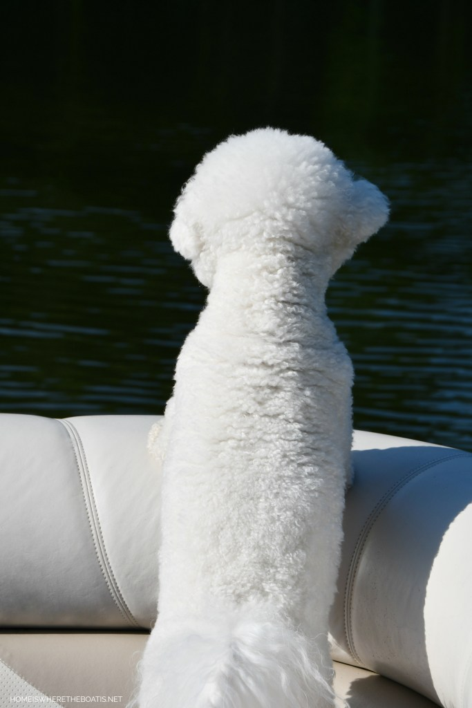 Lola on pontoon | ©homeiswheretheboatis.net #lake #LKN #boatingwithdogs #pontoon