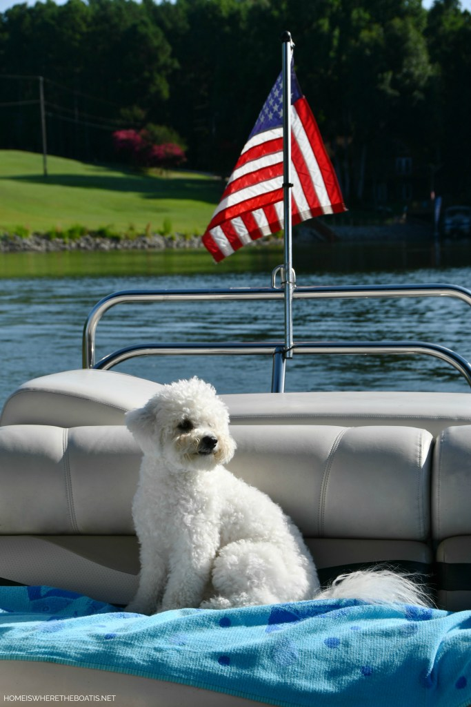 Sophie on pontoon | ©homeiswheretheboatis.net #lake #LKN #boatingwithdogs #pontoon #flag