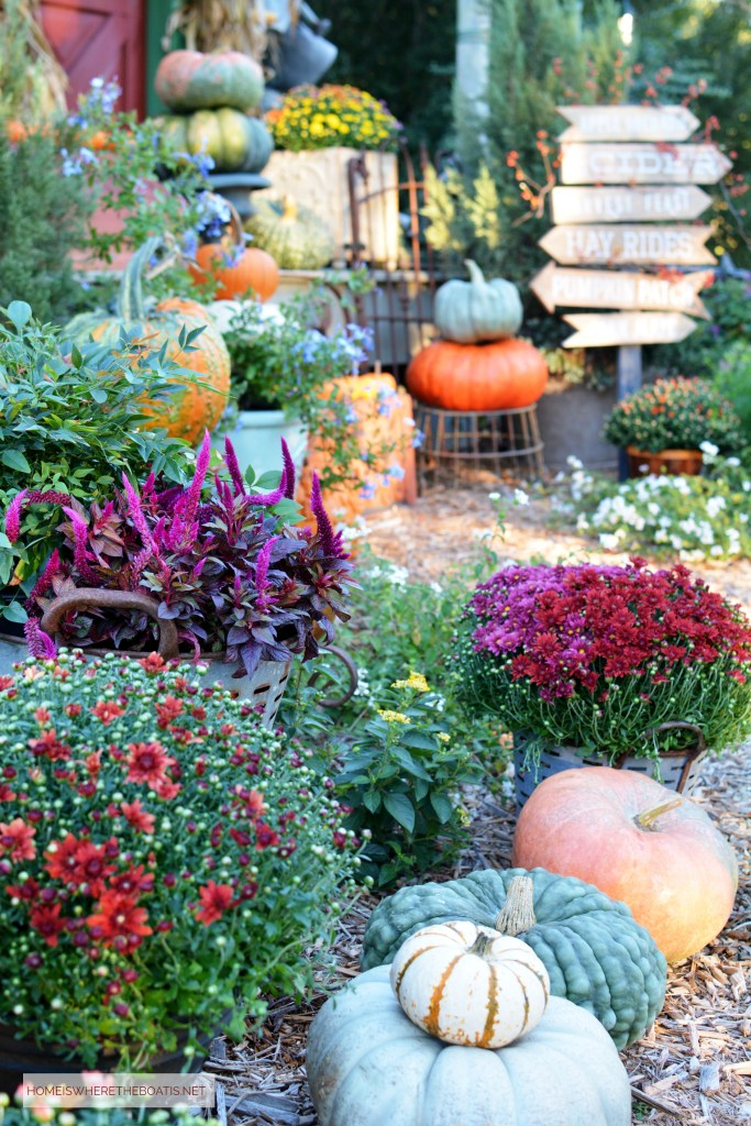 Harvest of pumpkins and mum for Fall Potting Shed | ©homeiswheretheboatis.net #fall #shed #pumpkins #mums