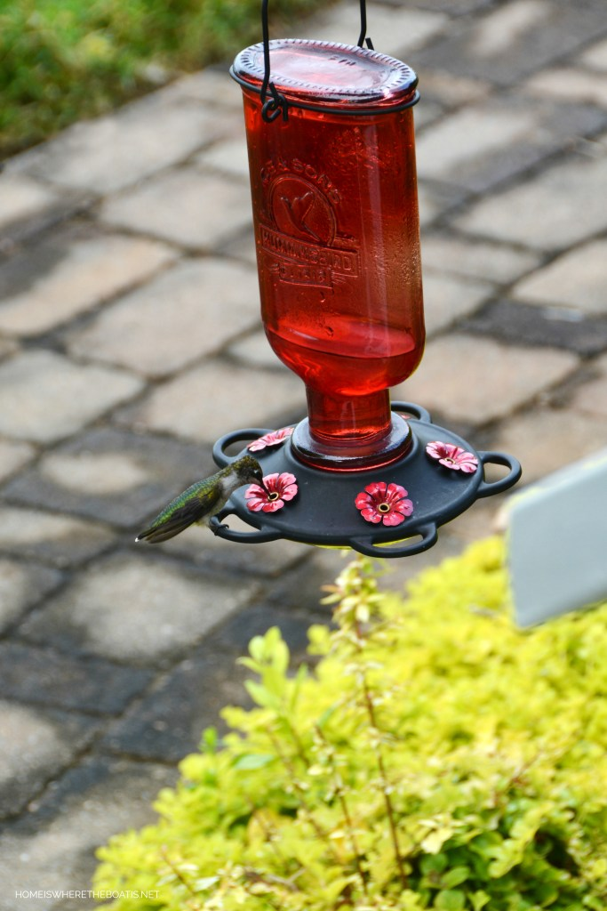 Attracting Hummingbirds and How to Revive a Tired Feeder | ©homeiswheretheboatis.net #hummingbirds #tips #DIY