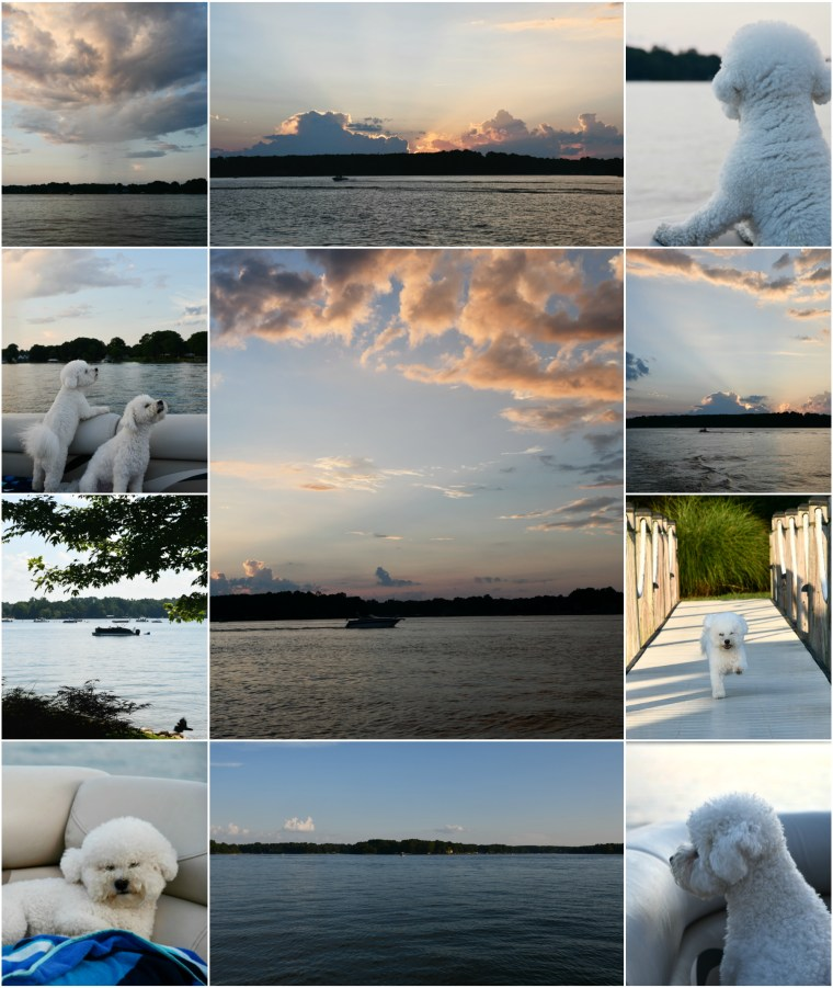 Weekend Waterview Dog Days of Summer | ©homeiswheretheboatis.net #lake #dogs #boat #sunset