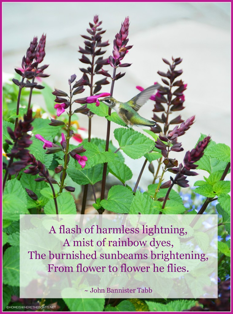 A flash of harmless lightning, A mist of rainbow dyes, The burnished sunbeams brightening, From flower to flower he flies. | ©homeiswheretheboatis.net #hummingbirds