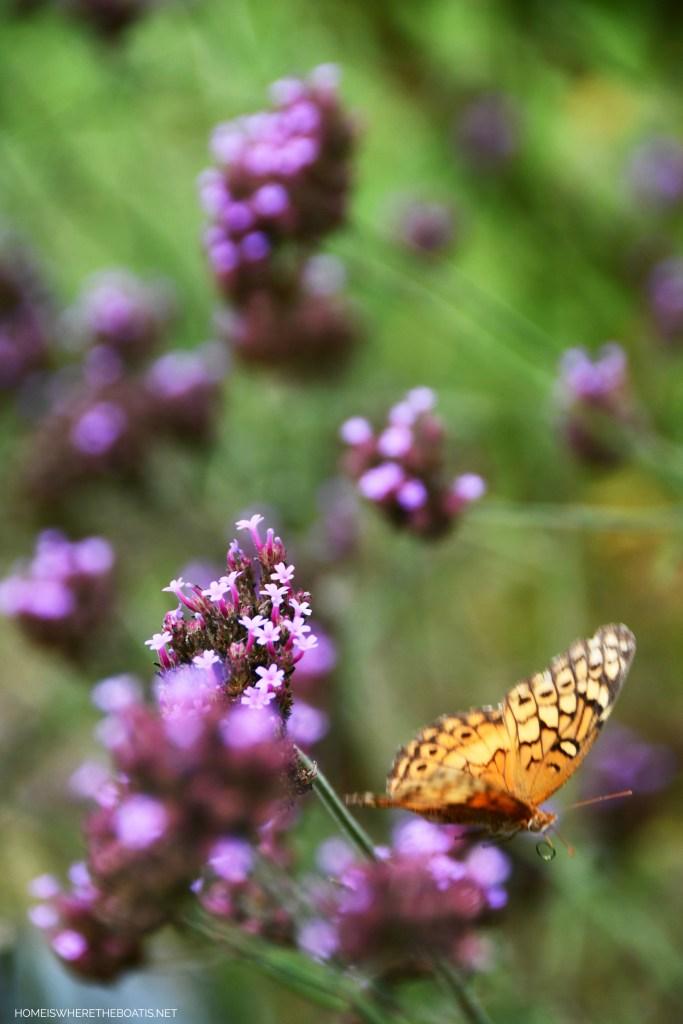 Fritillary Butterfly on Verbena Lollipop | ©homeiswheretheboatis.net #butterfly #garden #flowers