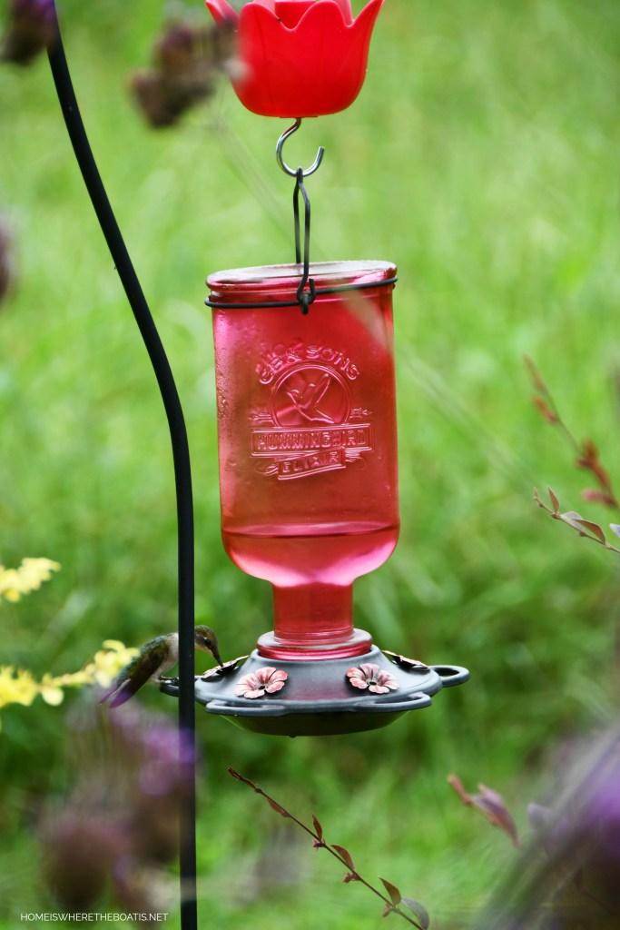 Hummingbird at feeder | ©homeiswheretheboatis.net #garden #hummingbird