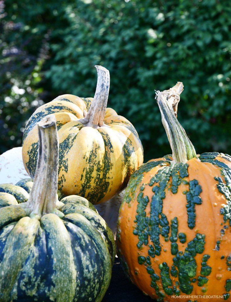 Pumpkins | ©homeiswheretheboatis.net #DIY #halloween