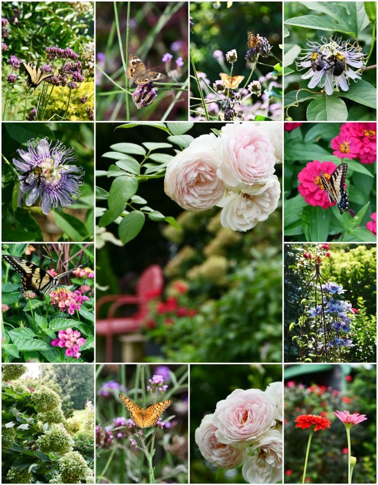 Late Summer Garden | ©homeiswheretheboatis.net #butterfly #garden #flowers #bees #hydrangeas
