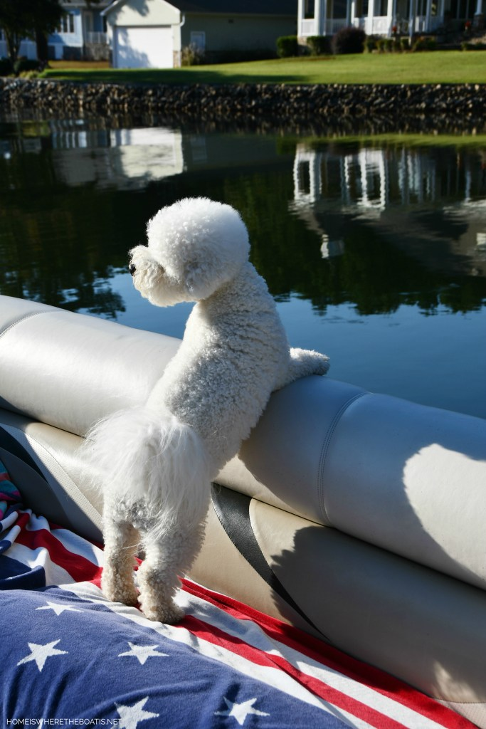 Lola on pontoon | ©homeiswheretheboatis.net #LKN #lake #boatingwithdogs #bichofrise