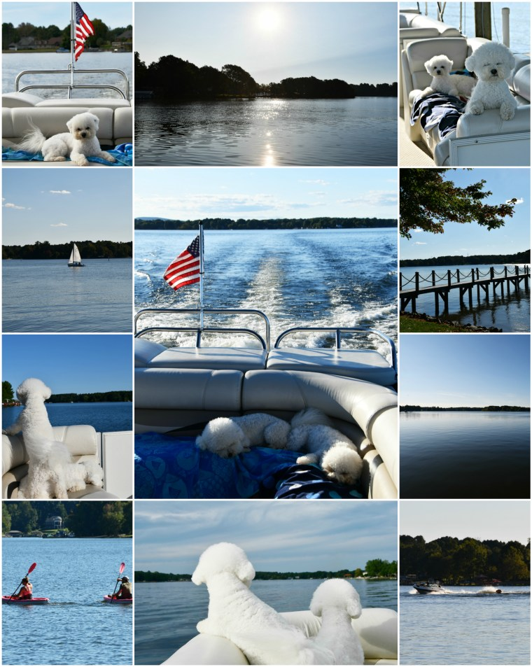 Weekend Waterview Lake Norman | ©homeiswheretheboatis.net #lake #boating #dogs #bichonfrise #LKN