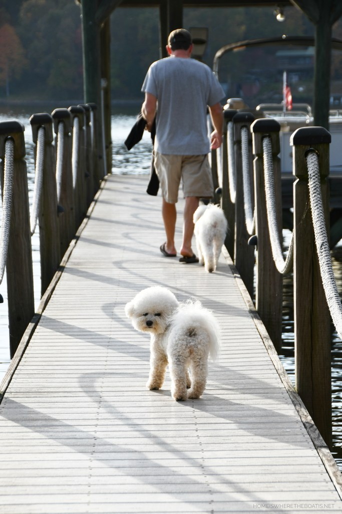 Dogs on dock going for boat ride | ©homeiswheretheboatis.net #dog #bichonfrise