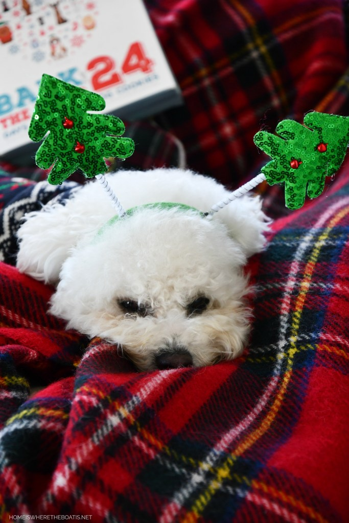 Sophie | ©homeiswheretheboatis.net #christmas #plaid #tartan #dogs #bichonfrise