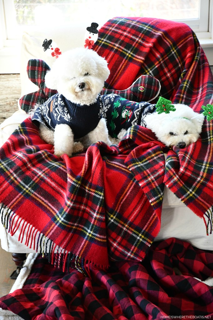 Lola and Sophie | ©homeiswheretheboatis.net #christmas #plaid #tartan #dogs #bichonfrise