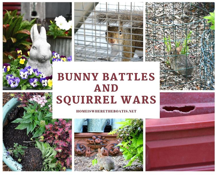 Bunny Battles and Squirrel Wars | ©homeiswheretheboatis.net #flowers #garden #squirrels #bunnies