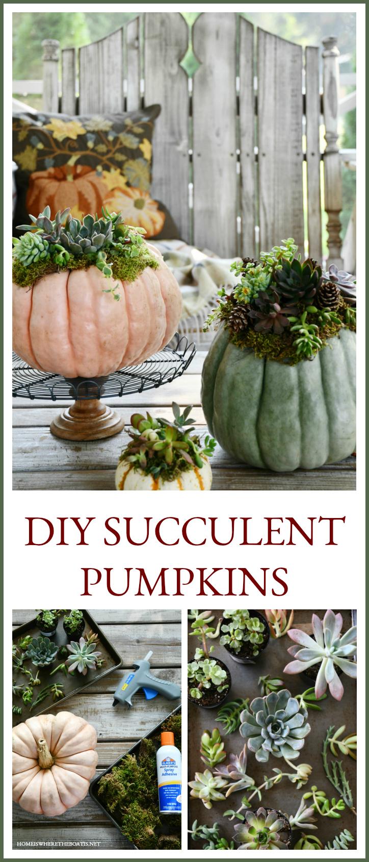 How to Create a Succulent Pumpkin Centerpiece   ©homeiswheretheboatis.net #pumpkin #succulents #centerpiece #DIY #fall #thanksgiving