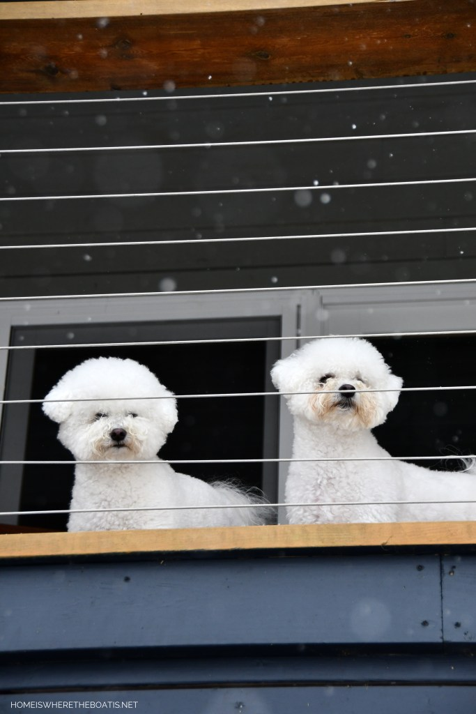 Lola and Sophie watching snow on porch in mountains | ©homeiswheretheboatis.net #dogs #snow #bichonfrise #ncmountains