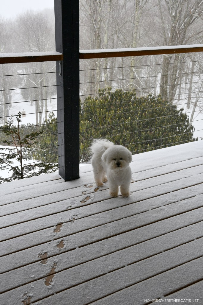 Lola on porch with snow | ©homeiswheretheboatis.net #dogs #snow #bichonfrise #ncmountains