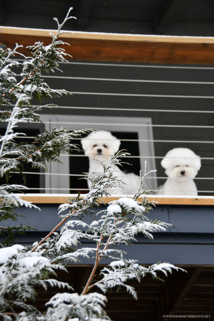 Lola and Sophie on porch in mountains   ©homeiswheretheboatis.net #dogs #snow #bichonfrise #ncmountains