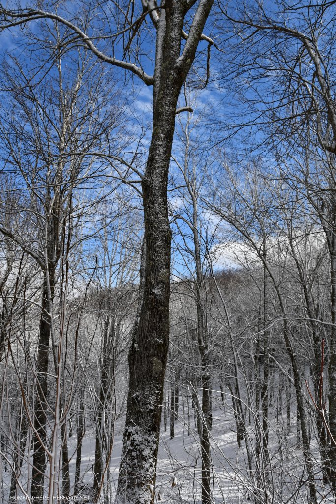 Weekend Mountain Views and Snow Days | ©homeiswheretheboatis.net #snow #ncmountains