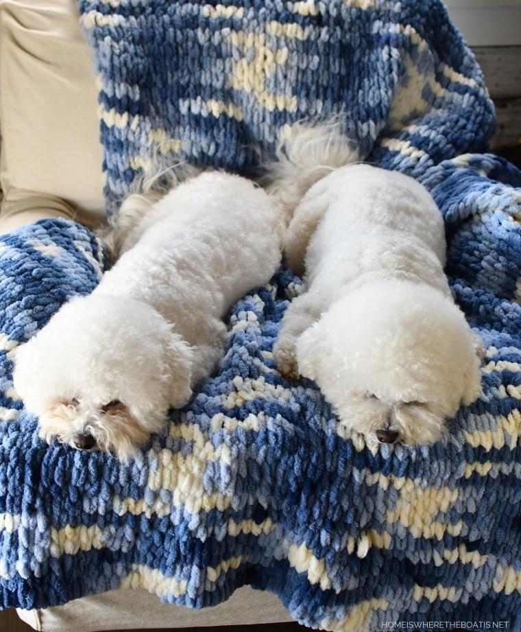 Lola and DIY EZ Loop Yarn Throw Blanket | ©homeiswheretheboatis.net #DIY #craft #yarn #noknit #blanket #dogs