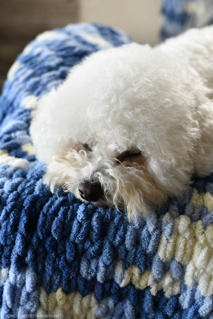 Sophie and DIY EZ Loop Yarn Throw Blanket | ©homeiswheretheboatis.net #DIY #craft #yarn #noknit #blanket #dogs