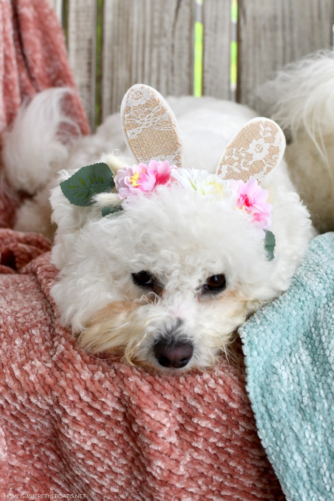 Sophie Bunny Ears | ©homeiswheretheboatis.net #dogs #bichonfrise #easter #bunnyears