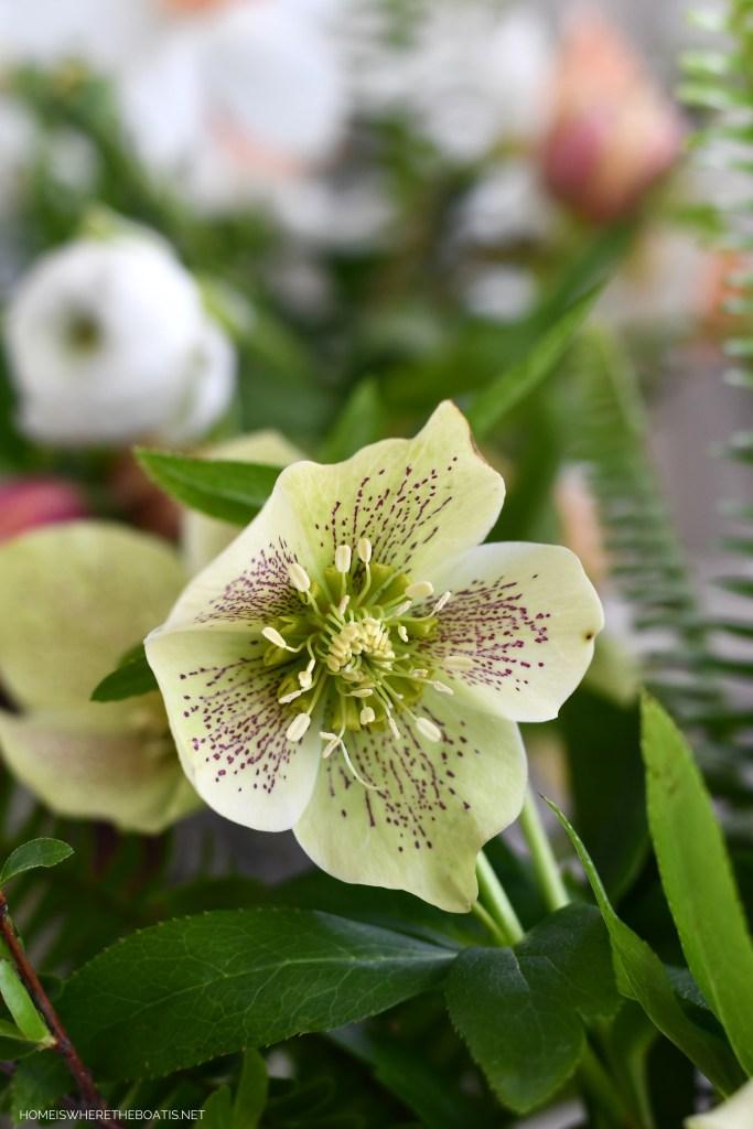 Lenten Rose | ©homeiswheretheboatis.net #diy #craft #flowers