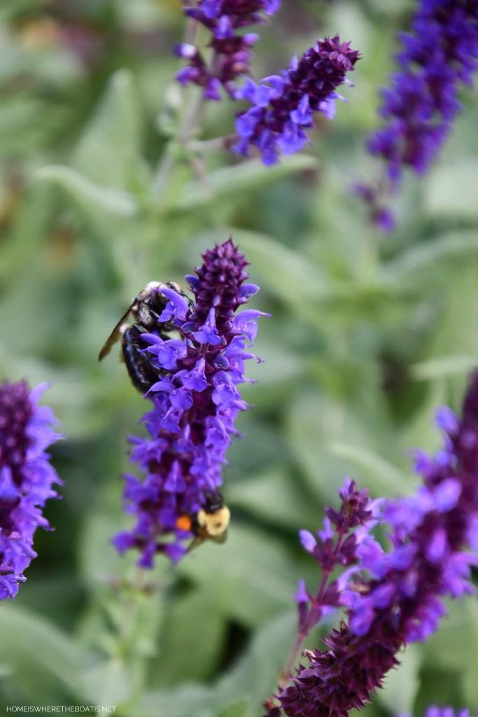 Bees in the garden | ©homeiswheretheboatis.net #DIY #bees #garden #flowers