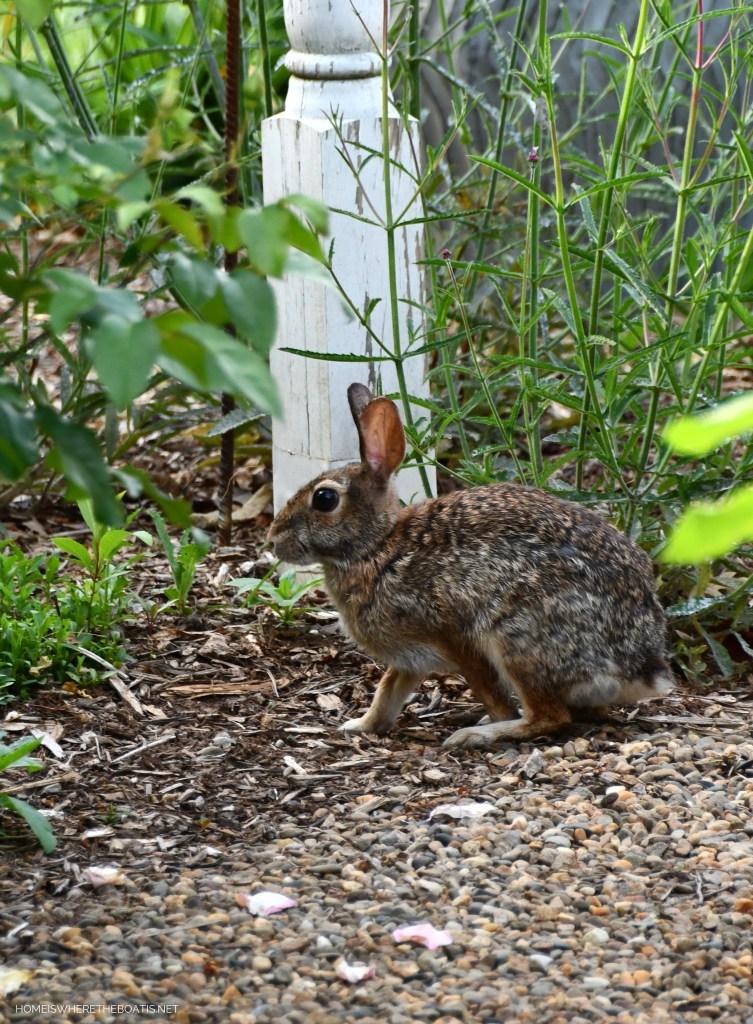 Bunny in garden | ©homeiswheretheboatis.net #pottingshed #garden #flowers