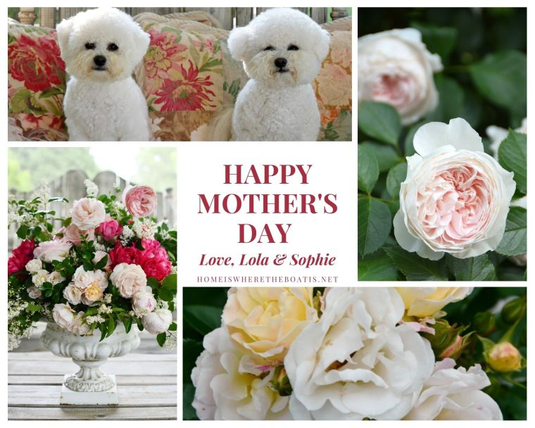 Happy Mother's Day from Lola and Sophie | ©homeiswheretheboatis.net #dogs #bichonfrise #flowers #roses