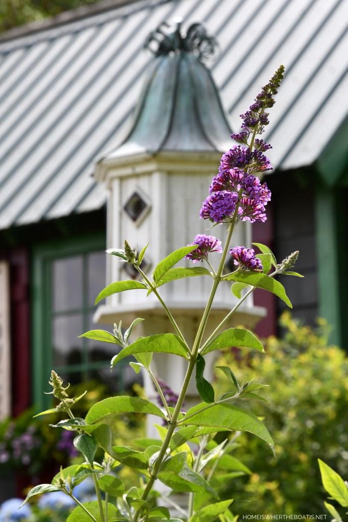 Garden Flowers Around the Potting Shed | ©homeiswheretheboatis.net #hydrangeas #garden #flowers