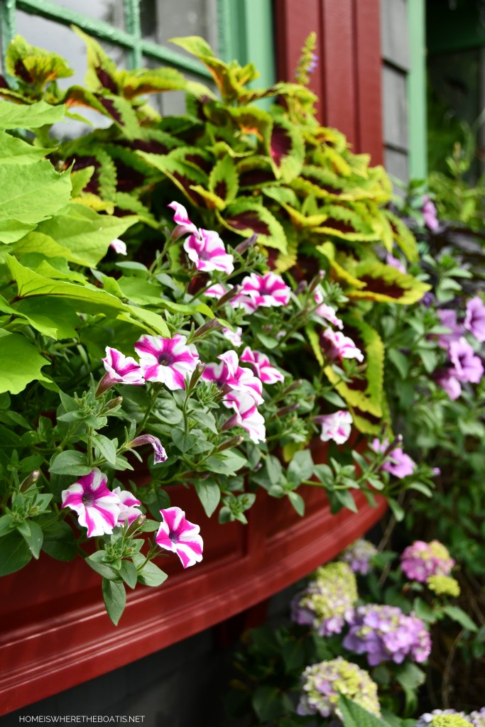 Blooming Window Boxes and Garden Flowers Around the Potting Shed | ©homeiswheretheboatis.net #garden #flowers #windowboxes