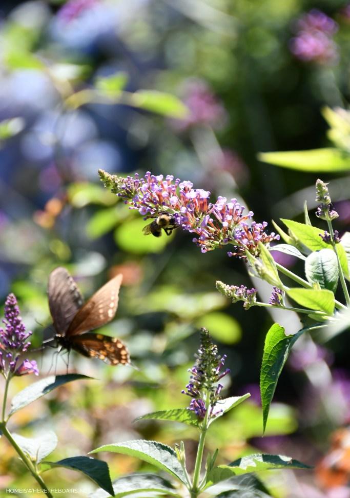 Butterfly and bee on butterfly bush bloom | ©homeiswheretheboatis.net #summer #garden #flowers #daylilies #hydrangeas #bees #butterflies