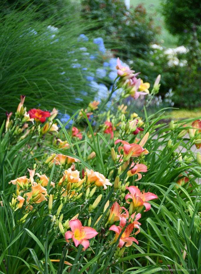 Summer Garden Blooms Around the Potting Shed | ©homeiswheretheboatis.net #summer #garden #flowers #daylilies #hydrangeas #bees #butterflies