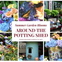 Summer Garden and Monday Morning Blooms Around the Potting Shed
