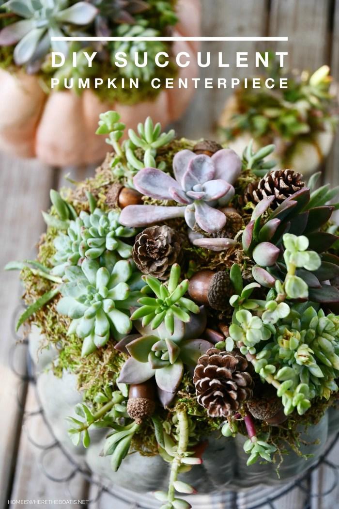 DIY Succulent Pumpkin Centerpiece   ©homeiswheretheboatis.net #pumpkin #succulents #centerpiece #DIY #fall #thanksgiving