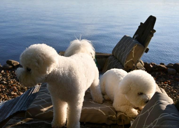 Weekend Waterview Lola & Sophie | ©homeiswheretheboatis.net #LKN #dogs #bichonfrise