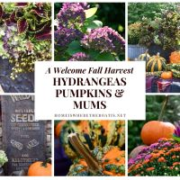 Welcoming Fall with a Colorful Harvest Arrangement of Hydrangeas, Pumpkins and Mums