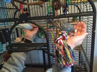 dr. harvey's parakeet food