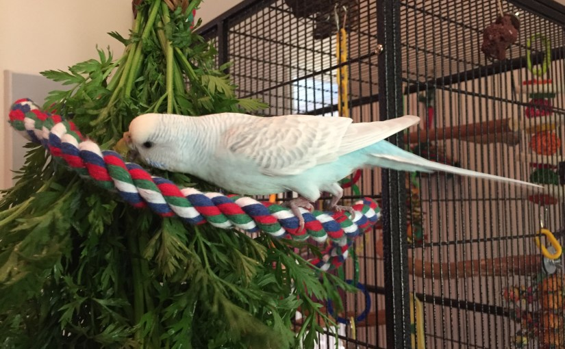 protect your parakeets from in-home flight accidents