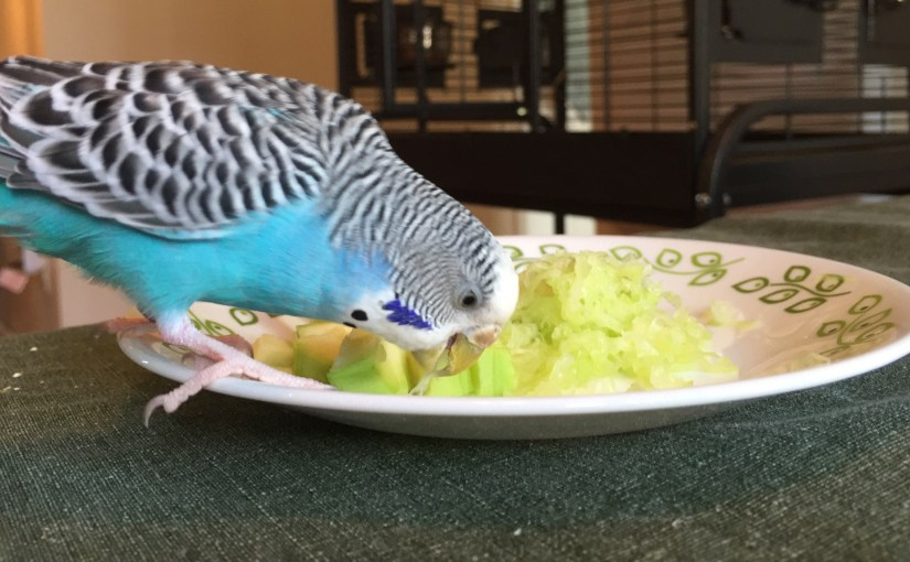 Cleaning up after budgies – tips to make every day easier