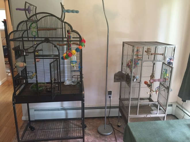 Splitting up the parakeets